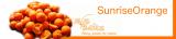 SFS Baits - BaitBox SunriseOrange inkl. Liquid + Powder